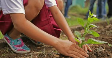 ültess növényt a gyerekekkel